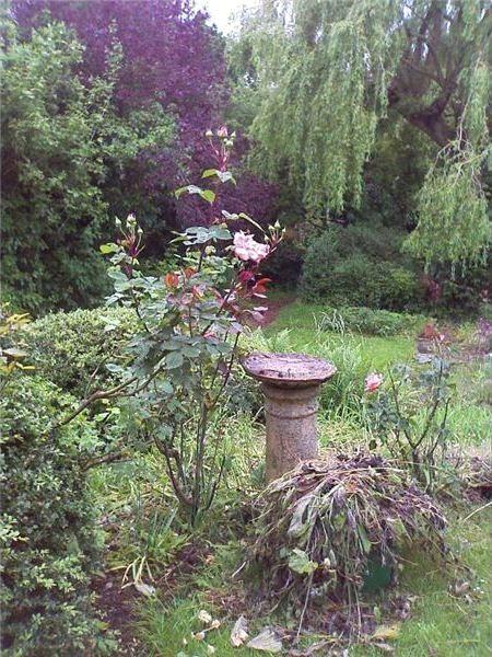Bird Paradise - Creating a Bird Garden