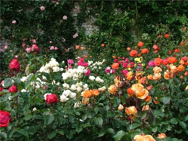 Learn How to Create a Victorian Rose Garden