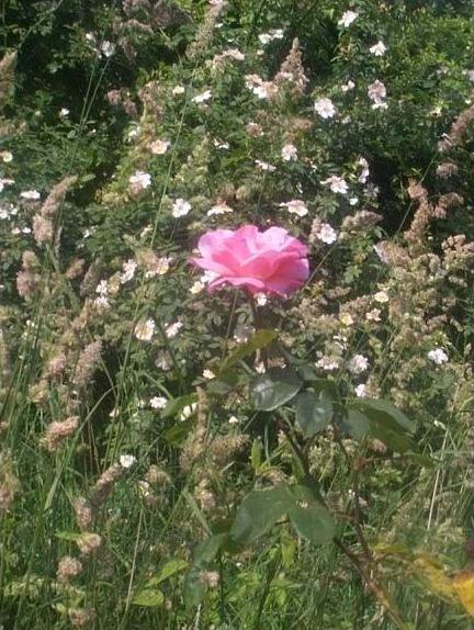 Creating Victorian Rose Garden