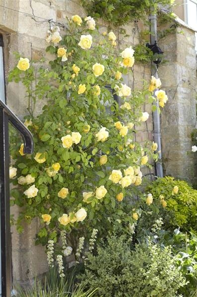 image - How to Create a Victorian Rose Garden: Creating a Victorian Rose Garden