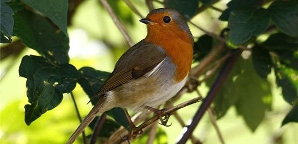 Create a Wildlife Bird Garden