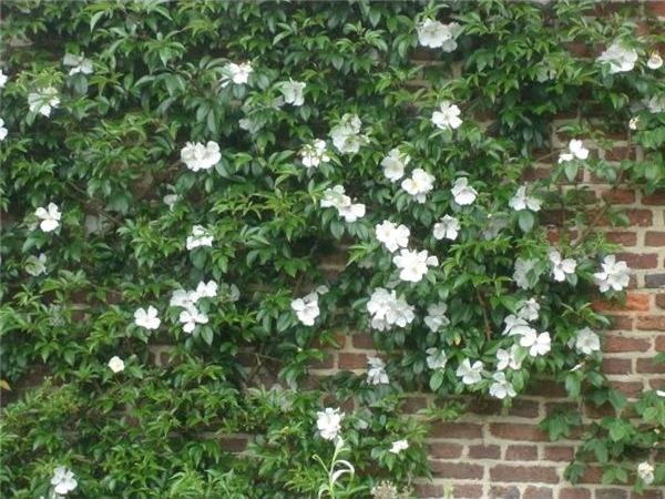 image - Creating a Victorian Rose Garden
