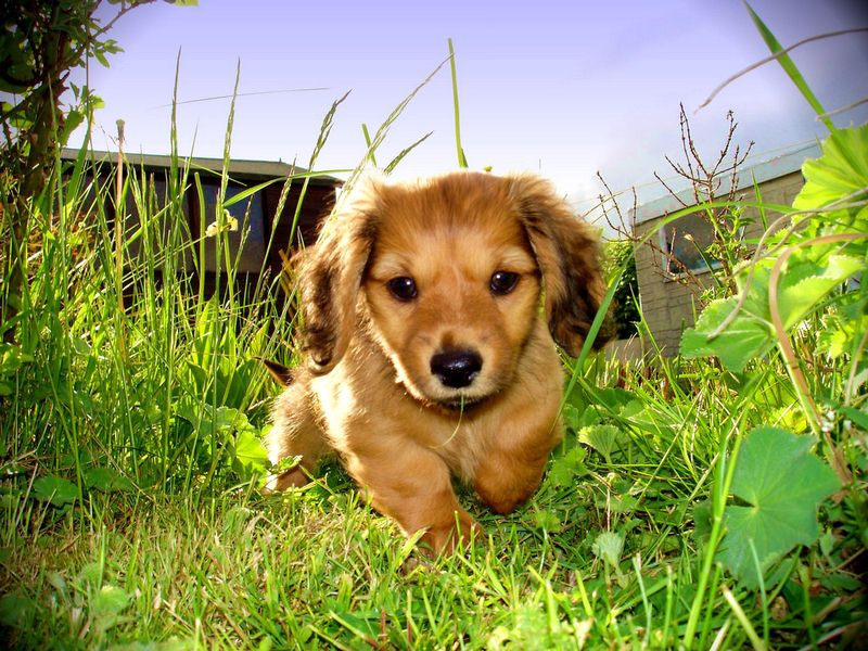 How to Make My Own Pet Safe Lawn Care Products