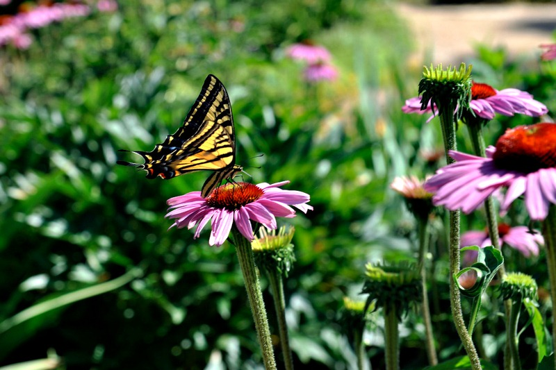Creating a DIY Butterfly Garden: Learn How to Make a Butterfly Garden