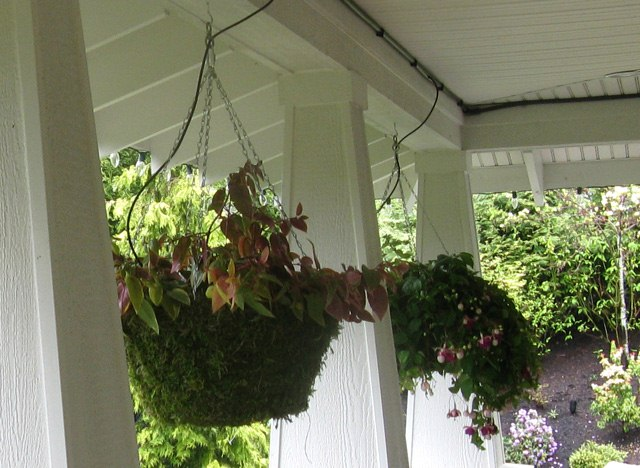 Drip Feed Watering is Ideal for Hanging Baskets - Drip Feed Irrigation Systems