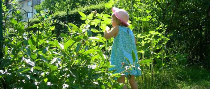 What are Key Gardening Tips for Children to Remember?