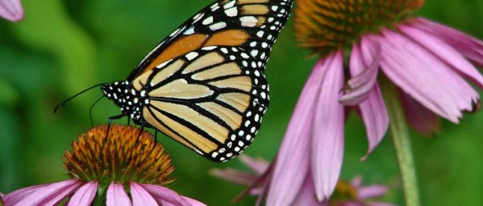 Learn How to Make a Butterfly Garden in Your Own Backyard