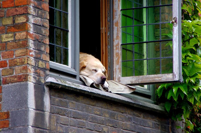 Adopt a Dog - 10 Surprisingly Simple Steps That Can Improve Your Home Security