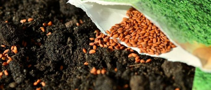 Starting Seeds for Your Spring Planting: Grow Your Plants from Seed, Avoid the High Cost of Store Bought Plants, and Have Fun Doing It!