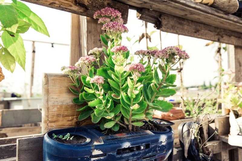 Sustainable Gardening: What to Plant, and Where to Plant It