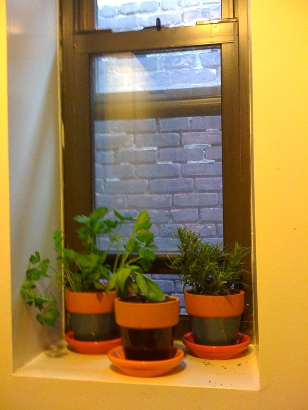 Create an Herb Garden in Your Kitchen - 6 Ways to Incorporate Nature into Your Home When You Live in a Concrete Jungle