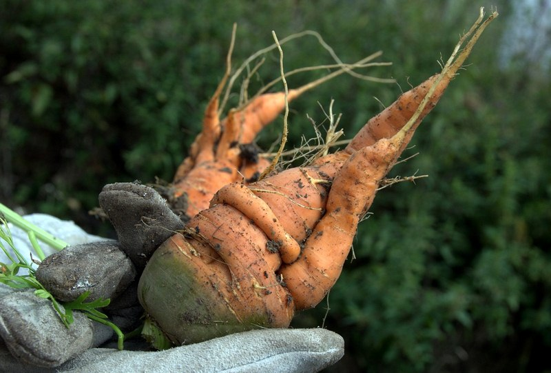 5 Steps to Ensuring the Health of Your Vegetable Crops