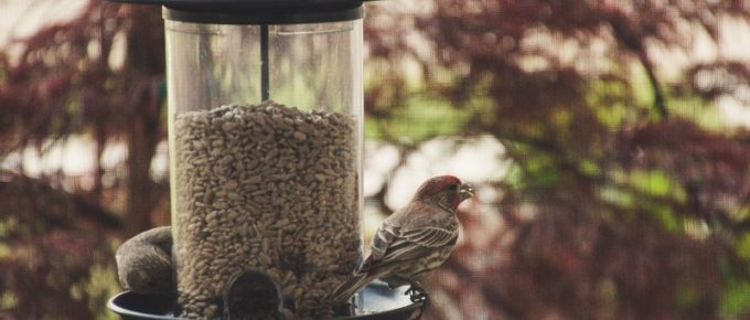 How to Save Your Bird Feeder (and Landscape) from Squirrels