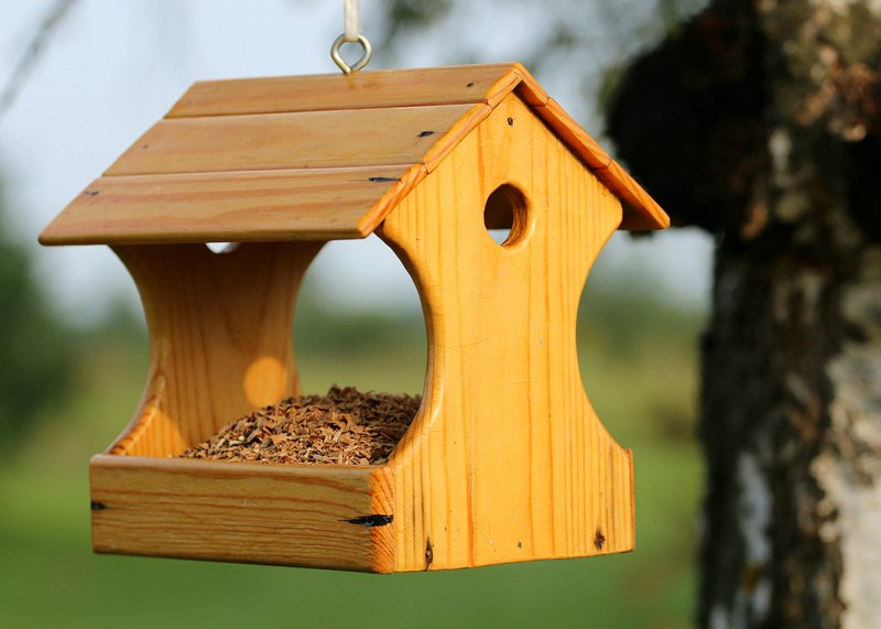 How to Keep Squirrels Away From Your Backyard Feeders