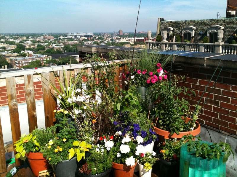 Balcony, Container Garden