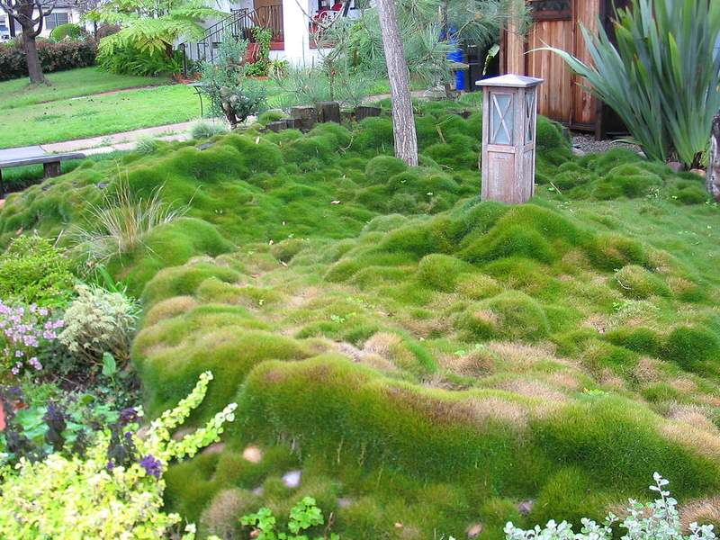 Zoysia Grass - The Best Types of Grass for Lawns