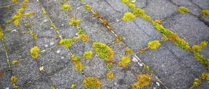 Best Way to Keep Weeds From Growing Between Pavers and Cracks