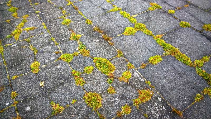 The Best Way and How to Stop Weeds Growing Between Pavers
