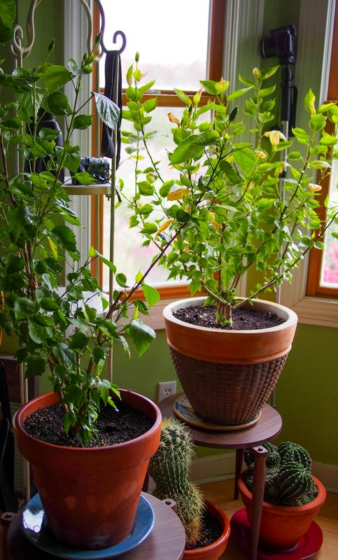 How to Keep Your Houseplants Alive and Healthy