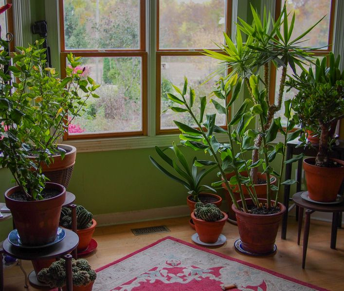 Keep Houseplants Alive and Healthy