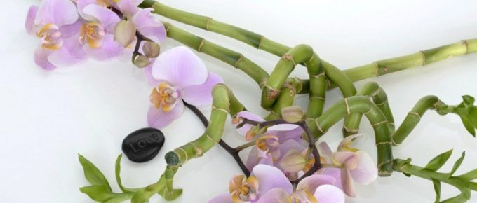 The Lucky Bamboo Plant, Feng Shui, Care and Maintenance Tips