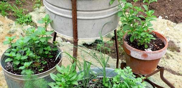 The Basics of Herb Gardening in Containers