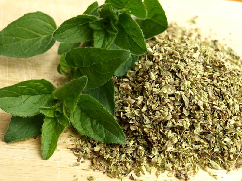 Oregano - Kitchen Herbs: How to Grow and Where to Use Them