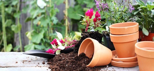 Taking the Guesswork out of Gardening Supplies