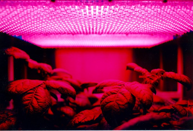 7 Things to Look for When Buying LED Grow Lights