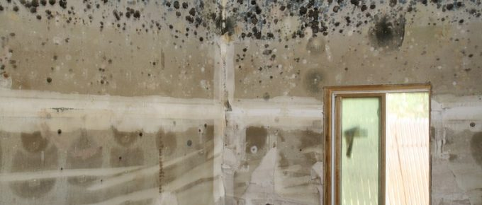 Removing Mold from Your Home: Pro vs. DIY Remediation