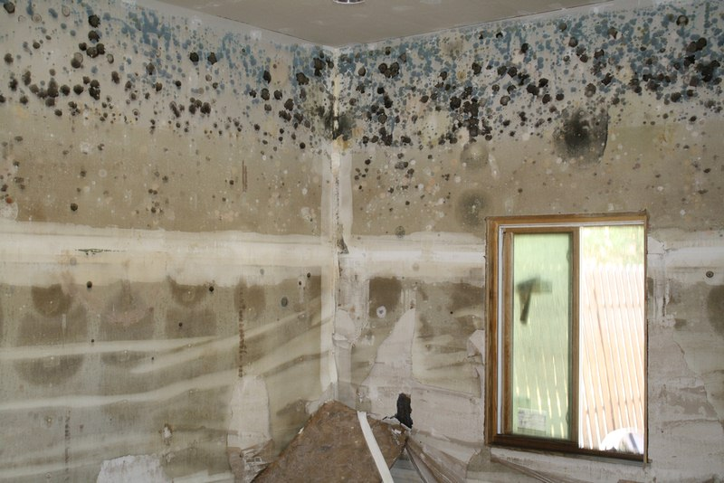 Removing Mold from Your Home - Pro vs DIY Remediation