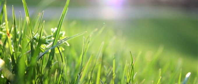 5 Common Questions about Watering Your Lawn