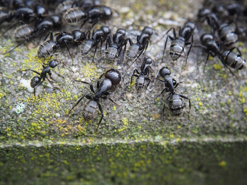 All-around Information on Ants to Help You Wage War on Them for Protection