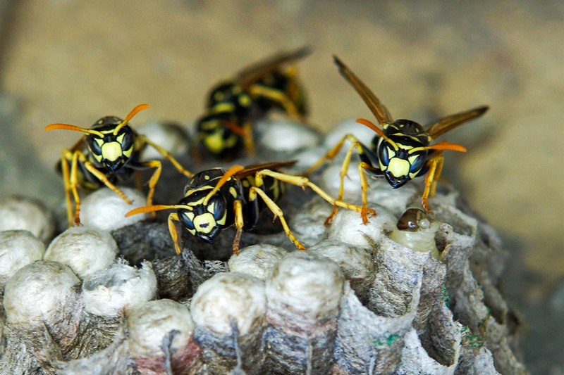 image - 5 Pro Tips to Prevent Wasp Infestation in Your Home