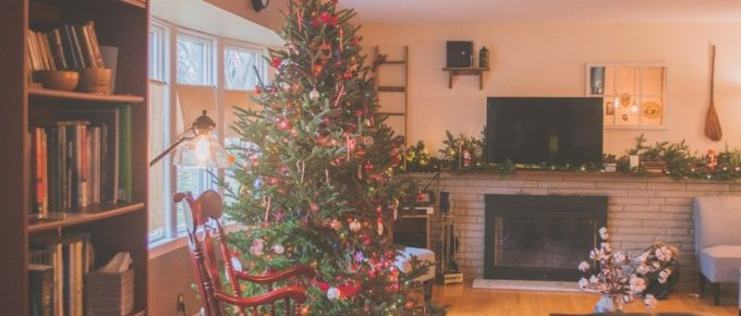 Caring for Your Living Christmas Tree After the Holidays