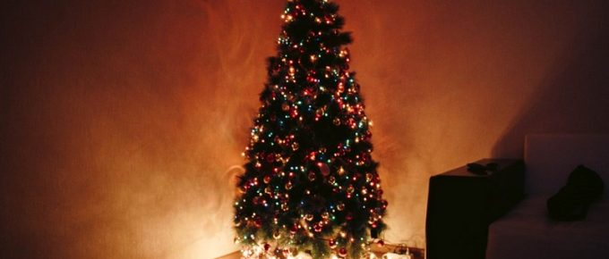 5 Tips to Choose the Perfect Christmas Tree This Year