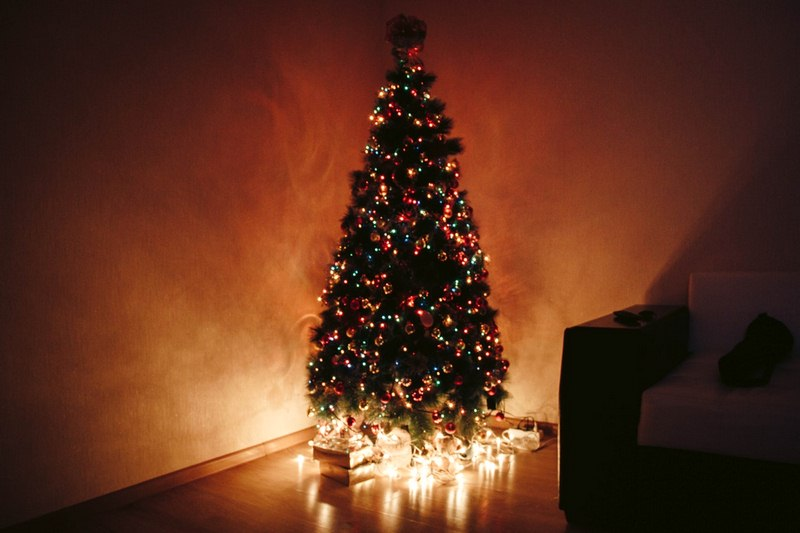 image - 5 Tips to Choose the Perfect Christmas Tree This Year