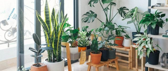 How to Create an Indoor Garden at Home