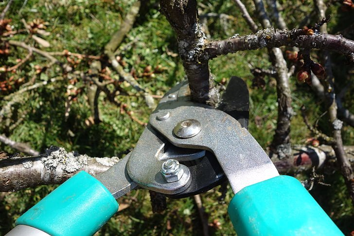 image - Common Tree Pruning Mistakes and Ways to Avoid Them