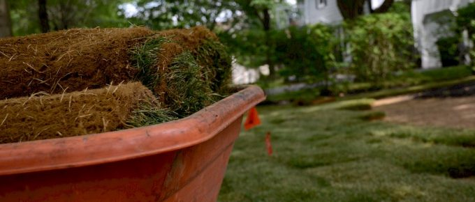 3 Simple Ways for Taking Care of Your Garden Sod