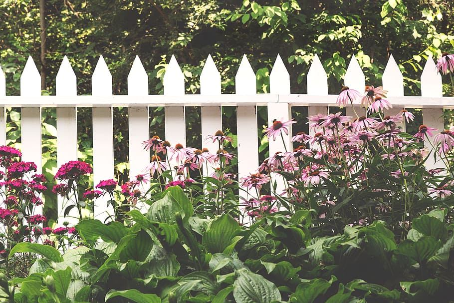 image - 7 Different Types of Fences: Best for Gardening