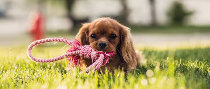 How to Have a Dog-Friendly Lawn