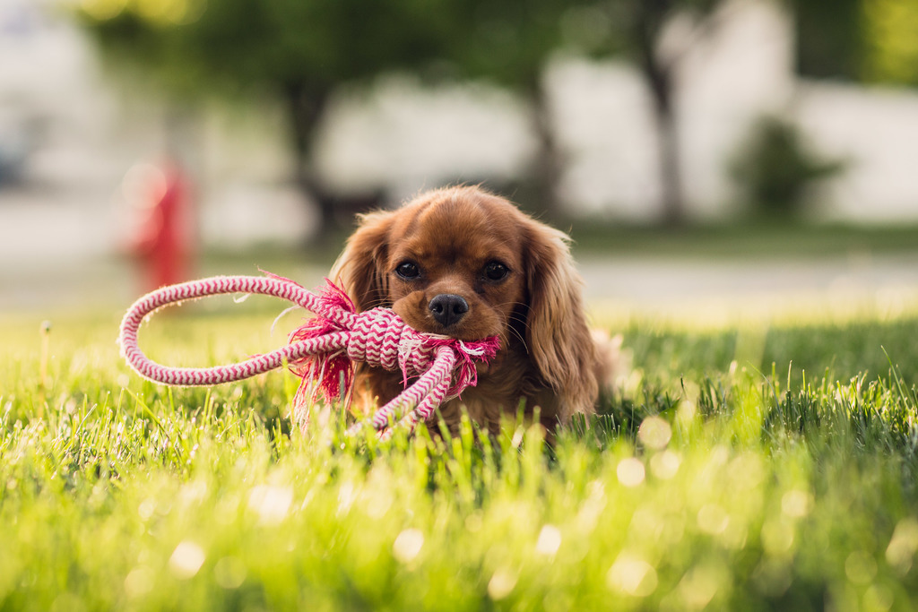 image - How to Have a Dog-Friendly Lawn
