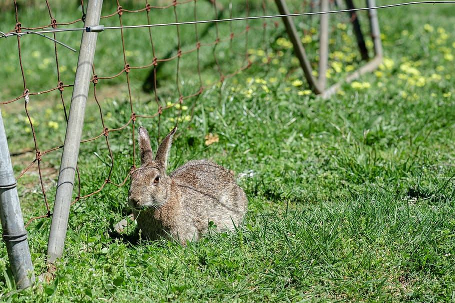 image - Rabbits