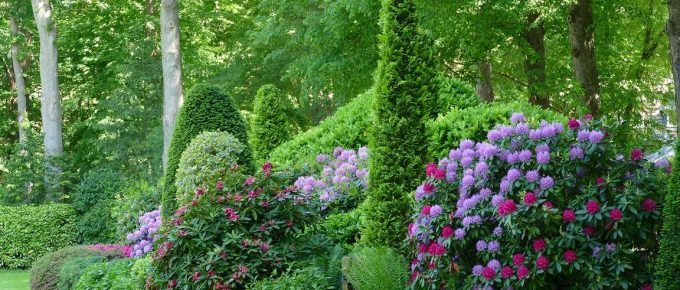 How to Choose the Best Border and Edging Plants for Your Landscape