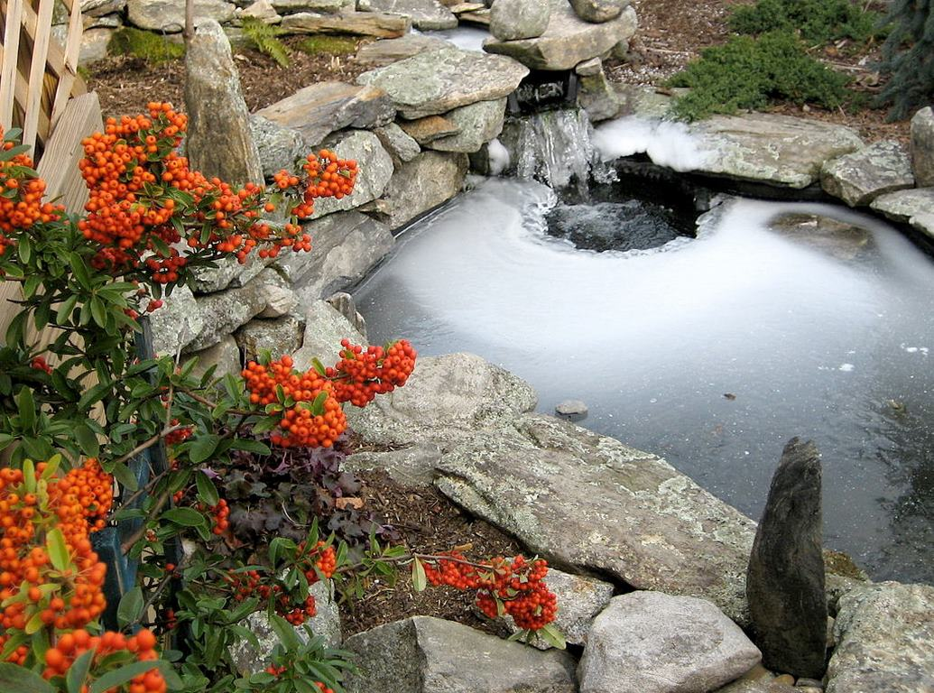 image - How to Get Your Pond Ready for the Cold Season