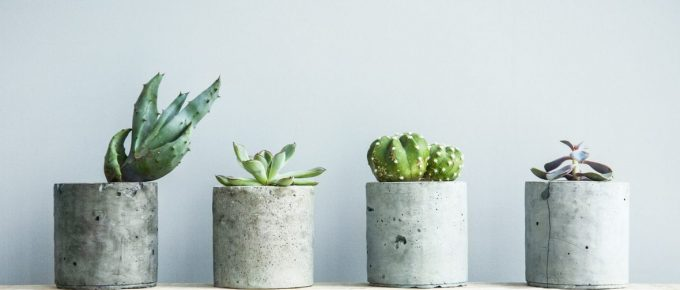 How to Properly Take Care of Your Succulents