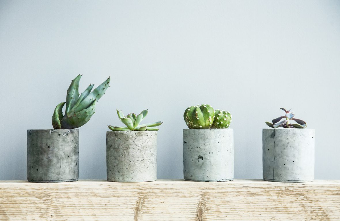 image - How to Properly Take Care of Your Succulents