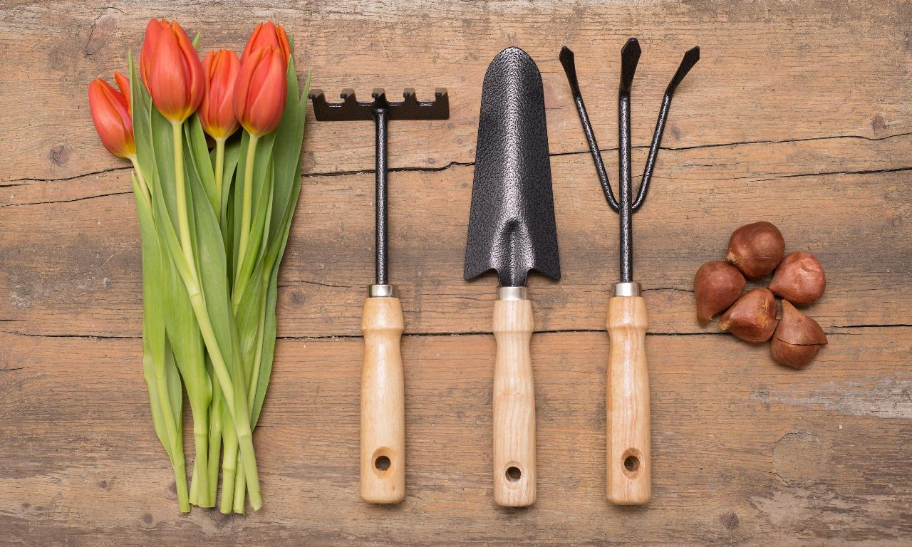 image - A Guide for Gardening Essentials for Beginners