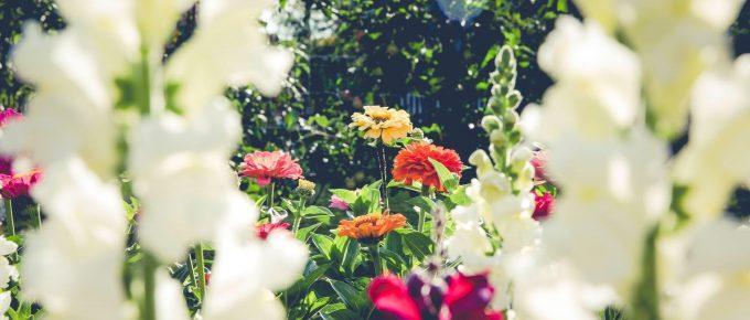 Make Gardening Easier — Basic Guide for Beginners